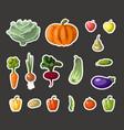 vintage garden banner with root veggies vector image vector image