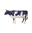 black and white spotty cow vector image
