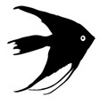 black silhouette of aquarium fish on white vector image vector image