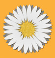 camomile chrysanthemum vector image vector image