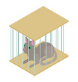 cat cage icon isometric 3d style vector image vector image