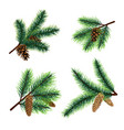 fir branch christmas tree branches with cones vector image vector image