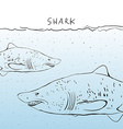 Two Great White Shark in the water Sketch Black vector image