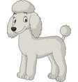 cartoon poodle dog isolated on white background vector image vector image