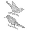 coloring pages for adults little wild birds for vector image