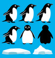 set of penguins vector image vector image