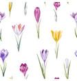 watercolor crocus floral pattern vector image vector image