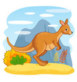 cute kangaroos jumping through the sand vector image vector image