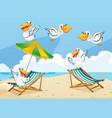 scene with pelican birds on the beach vector image