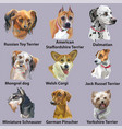 set of portraits of dog breeds-3 vector image vector image