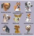 set portraits dog breeds-3 vector image vector image