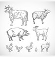 hand drawn domestic animals set a collection of vector image