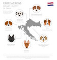dogs by country of origin croatian dog breeds vector image vector image