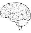 Human Brain Side View vector image vector image