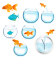 fish and aquariums vector image vector image
