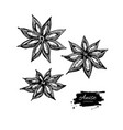anise star drawing hand drawn sketch vector image vector image