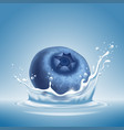 blueberry in water splash vector image vector image