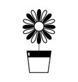 contour sunflower with petals inside to flowerpot vector image vector image
