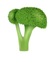 garden broccoli icon realistic style vector image