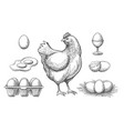 hen and eggs sketch vector image