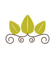 tea leafs product frame vector image
