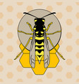 wasp on honeycombs vector image vector image