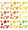 Set of colorful autumn leaves EPS 10 vector image
