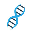 dna human genetic vector image vector image