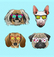 dog wearing sunglasses year of the dog vector image