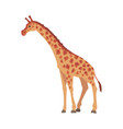 giraffe wild african animal side view cartoon vector image
