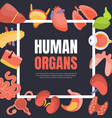 human organs banner template with space for text vector image vector image