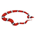 milk snake isolated on a white background vector image