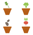Cute beautiful seeds collection isolated on white vector image vector image