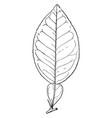grapefruit leaf vintage vector image vector image