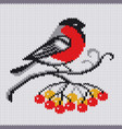 knitted pattern with bullfinch vector image