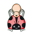 little spider and ladybug insects kawaii vector image