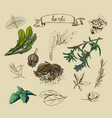 with hand drawn herbs vector image