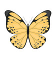 yellow tropical butterfly beautiful colorful vector image vector image