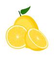 lemon fruit half and slice on white background vector image