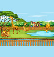 scene with giraffes and people at zoo vector image vector image