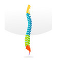 spine bone detailed vector image