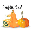 three different pumpkin isolated on white vector image