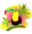 tukan colorful summer bird vector image