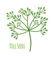 seasoning dill condiment seeds flat style vector image