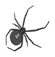 an arthropod bug is an insecta spider a vector image