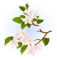 branches of apple tree with flowers set three vector image vector image