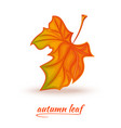 fallen autumn leaf logo design vector image