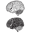 human brain cartoon set vector image