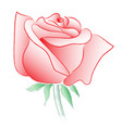 rose watercolor line drawing on white background vector image vector image