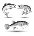 set fishes isolated vector image